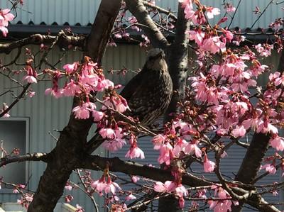 鳥_210307_51.jpg