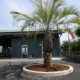 太陽光発電とヤシの木が似合う、お気に入りの事務所。